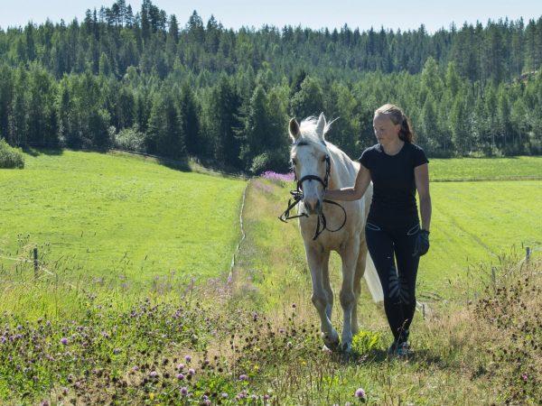 kelokoski-horses-nurmes