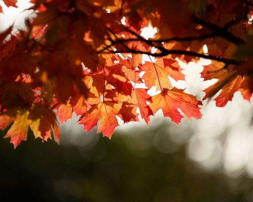 https://www.visitkarelia.fi/files/vk-harri-tarvainen-autumn-leafs-jpg-e1629892370412.jpg