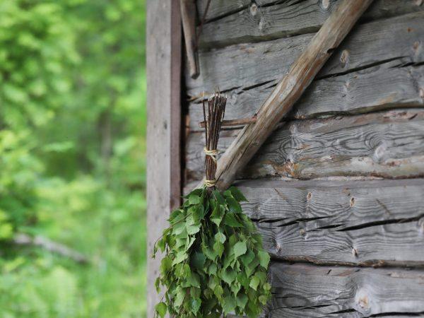 vk-sauna-summer-birch