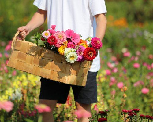 https://www.visitkarelia.fi/files/vk-harri-tarvainen-flowers-jpg-1.jpg
