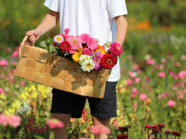 vk-Karjalanruusu-rääkkylässä-kukkakuhhaus-puutarha-kukkia