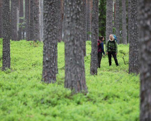 https://www.visitkarelia.fi/files/vk-harri-tarvainen-foresthikers-jpg.jpg