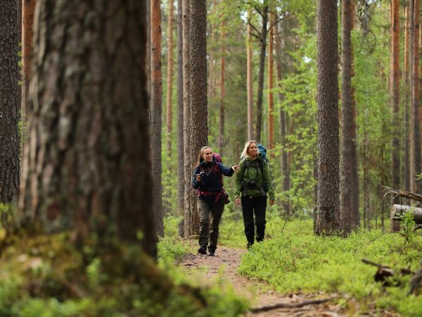 vk-summer-hiking-hikers-forest