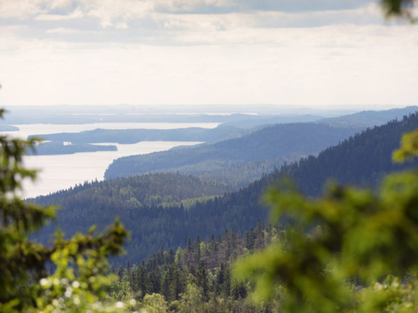 vk-koli-view-summer