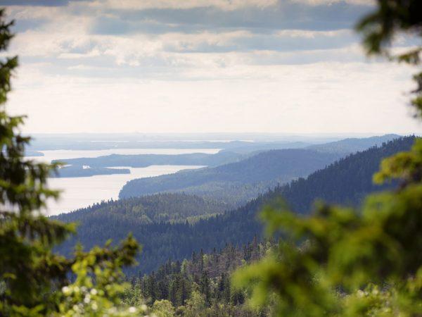 VK-Koli-National-Park-Summer