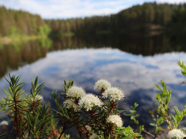 VK-Summer-Lake-Flowers