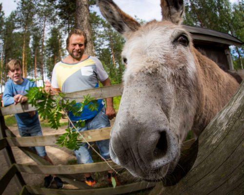 https://www.visitkarelia.fi/files/vk-jarno-artika-kitee-zoo2016-4.jpg